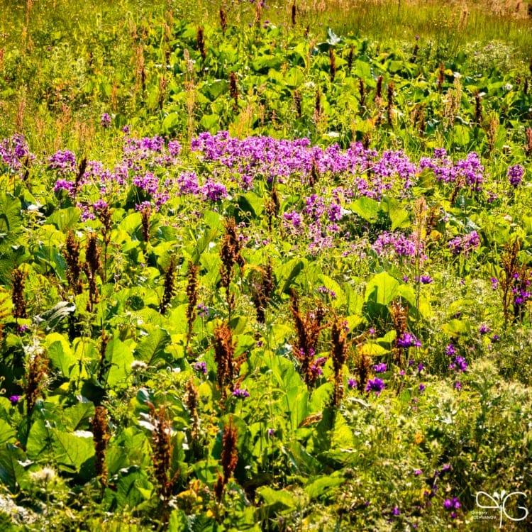 Зелень на поляне в Дагестане