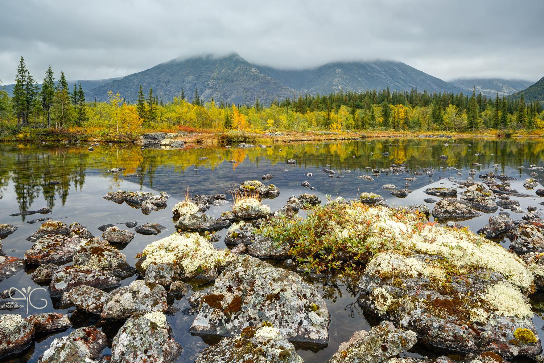Сентябрьский вид на Рисчорр, скрытый в облаках, с лишайниками на переднем плане