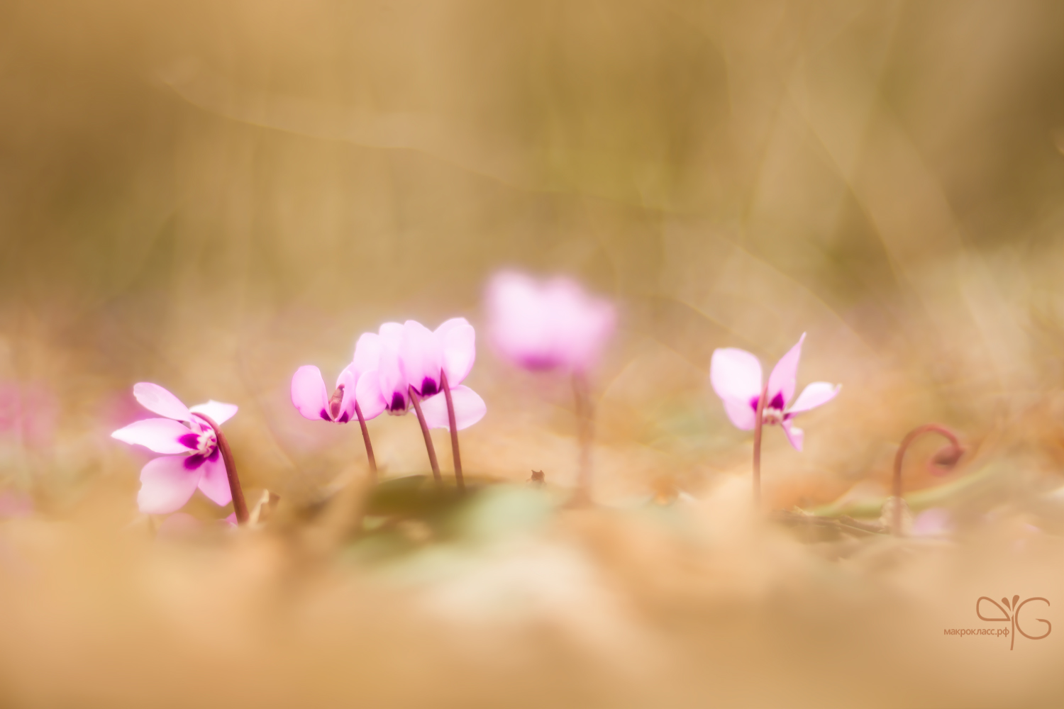 Little pink cuties at a nowhere lawn