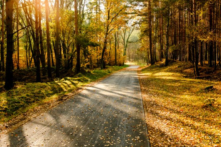 Велодорожка D3 проходит через лес у Швиловзее