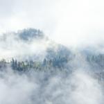 Весенний лес на склонах Кавказских гор, Адыгея